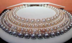 pearl city halifax