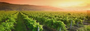 A Taste of Nova Scotia Wines